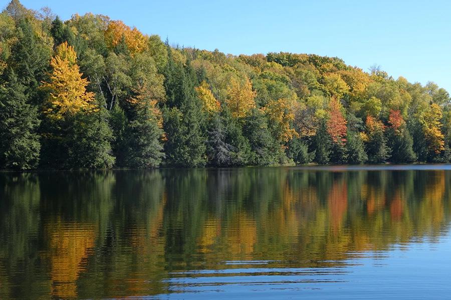 lake treeline