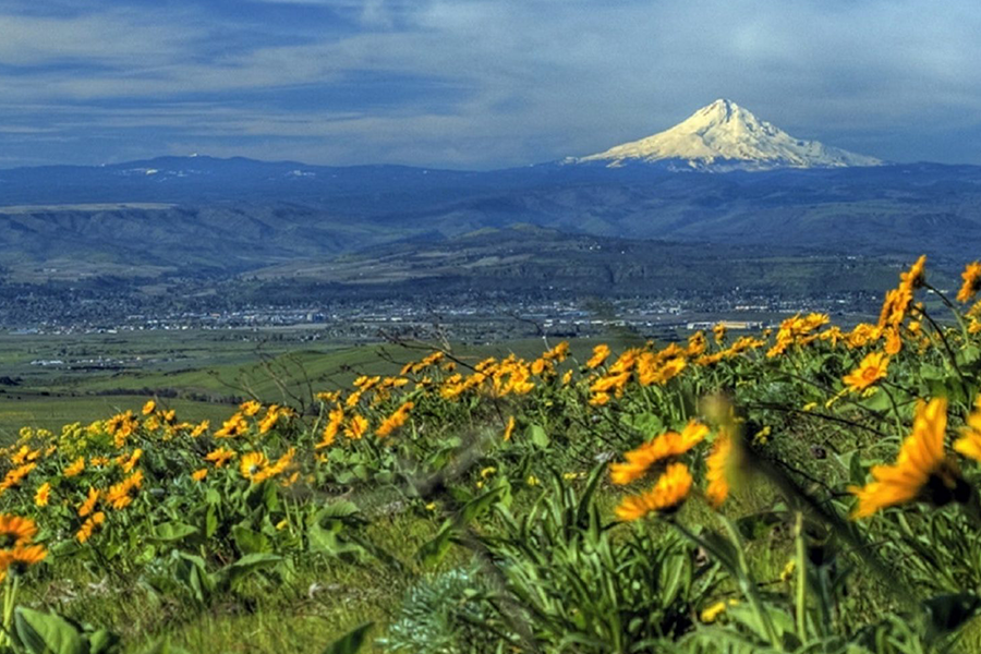 field with mount fiji in background