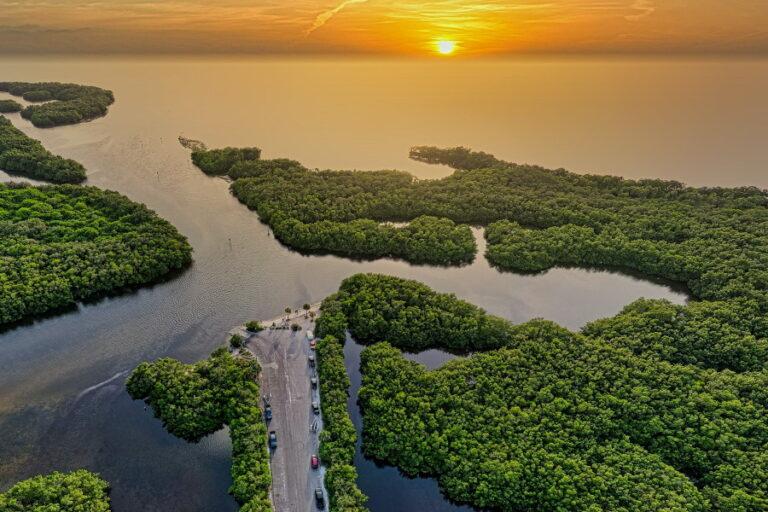 green trees on island sunset