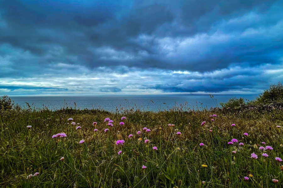 summer storm with grass and flowers