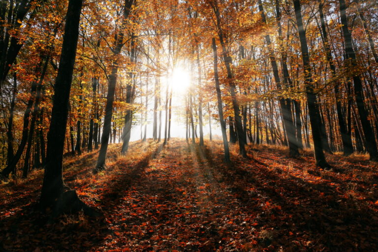 sunrise in fall forest